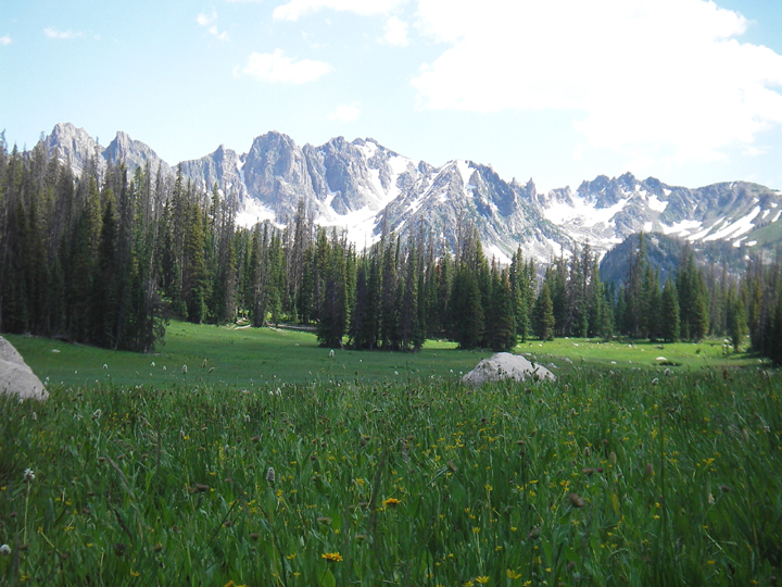 Meadow and valley view of the Park Range where wildflowers dot the meadow. Pine trees stand idle in the distance near the base of a mountain ridge that still houses snow.